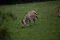 marwell-zoo-14.jpg