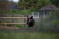 marwell-zoo-41.jpg