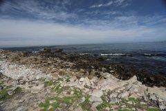Monterey-559.jpg
